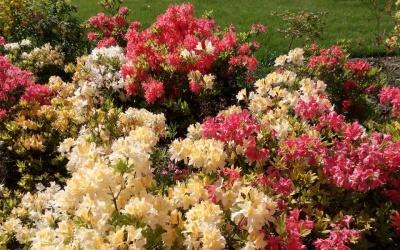 Цветі в Ботаническом сабу. Мастер класс живописи